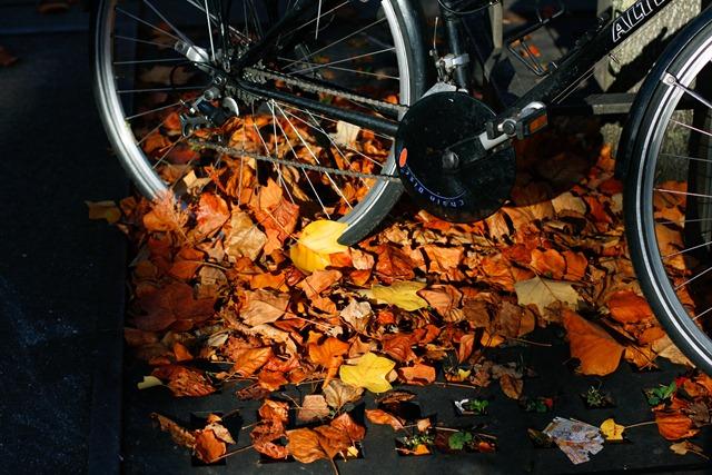 Fall-Oct12-9964