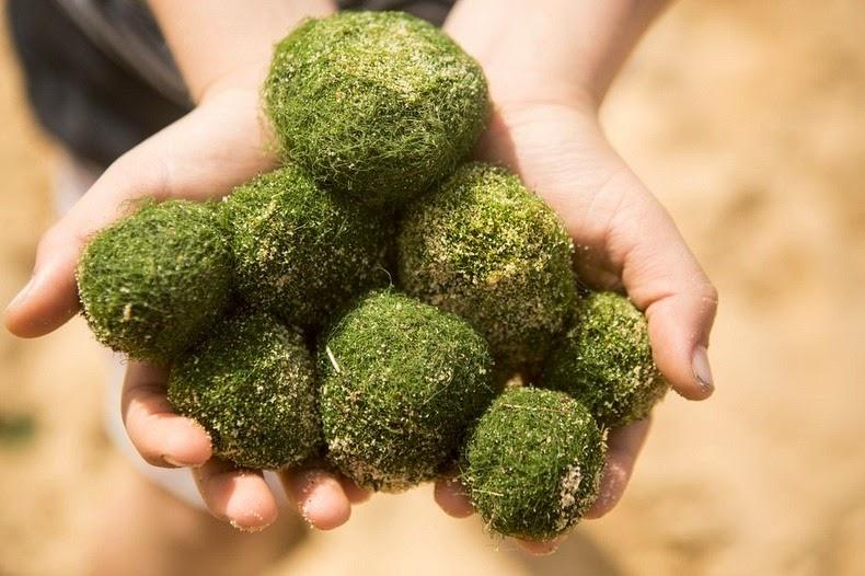 marimo-moss-balls-12