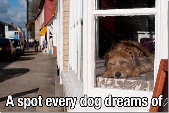 dog-mans-best-friend-10