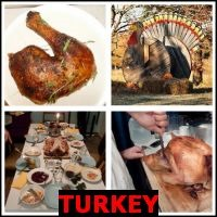 TURKEY- Whats The Word Answers