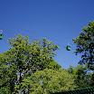 Bronx Zoo - Skyfari