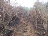 The steep muddy trail up Gunung Manglayang (Dan Quinn, November 2012)
