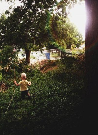 treeadventures