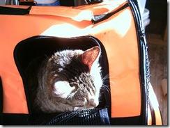 Bobbie-in-stroller
