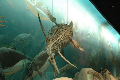 海獣の先祖の化石