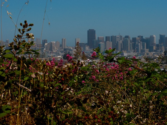 Bernal Hill Walk (1)