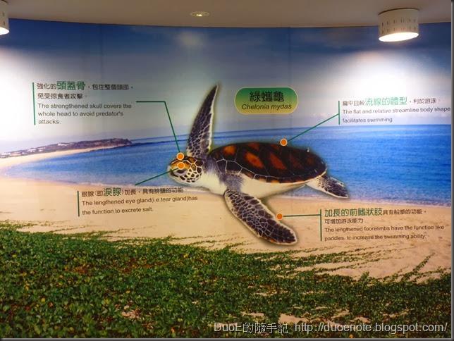 望安綠蠵龜保育中心