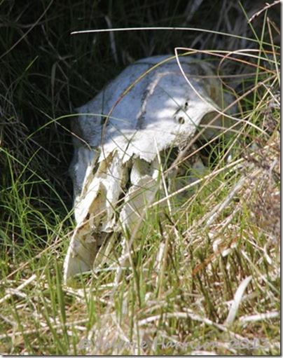 8-skull