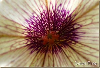 flower photos_031