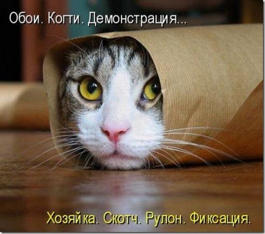 1313674079_kotomatrix_42