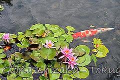 7 -Glória Ishizaka - Tokugawaen - Nagoya - Jp