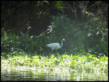Wekiwa Springs State Park (55)