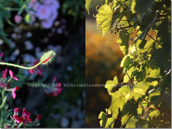 ogród i biszkopt z papierówkami6