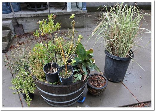 120411_plants