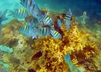 corais Maragogi