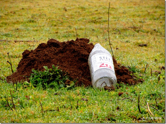 After the long weekend, the mole problem turns ugly.  Gresham, Oregon.  December 20, 2011.  Photo of the Day by A. F. Litt: May 29, 2012.