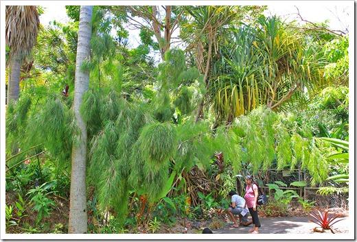 130713_TropicalGardensOfMaui_026