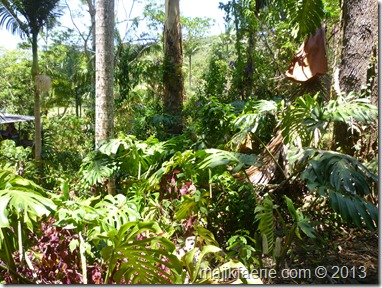 40 rainforest