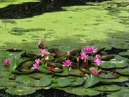 Luna de miere Thailanda: Lotusi thailandezi