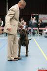20130511-BMCN-Bullmastiff-Championship-Clubmatch-2270.jpg
