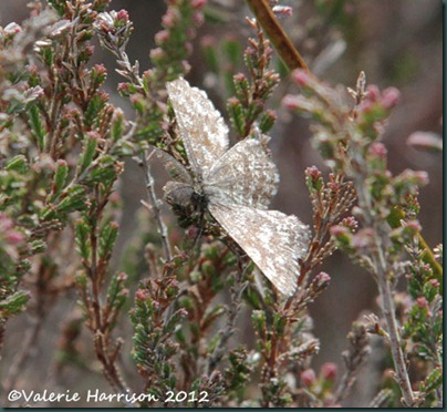 3-common-heath