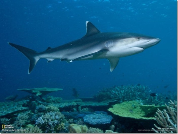 Fotos subaquáticas de David Doubilet (13)