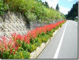arboles con flores (11)