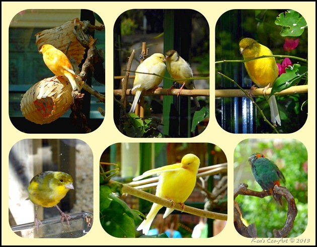 Bellagio Bird Collage