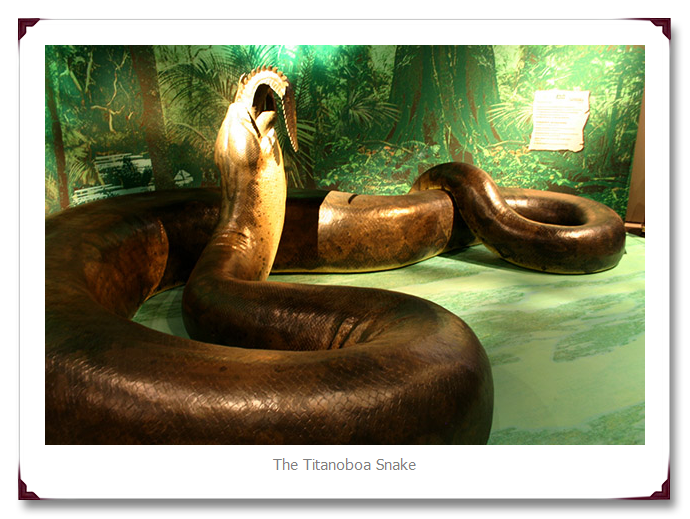 World Biggest Titanoboa Snake