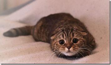 gatti-botti-capodanno
