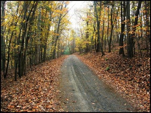 Fall Drive1