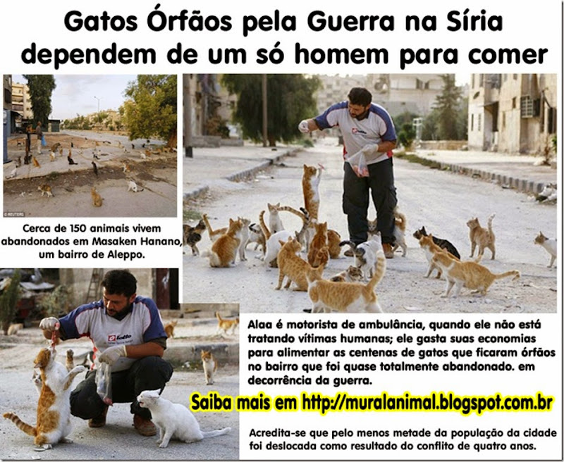 gatos_orfaos-siria