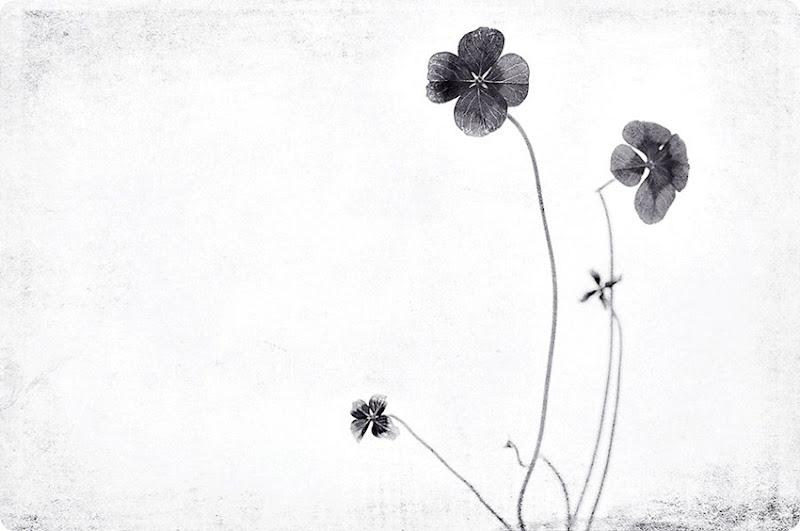 4-leaf-clover-bw