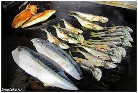 Рыба. Анадолу Кавагы. Турция.