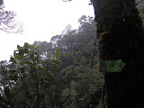 Forest on Gunung Sago (Daniel Quinn, September 2011)
