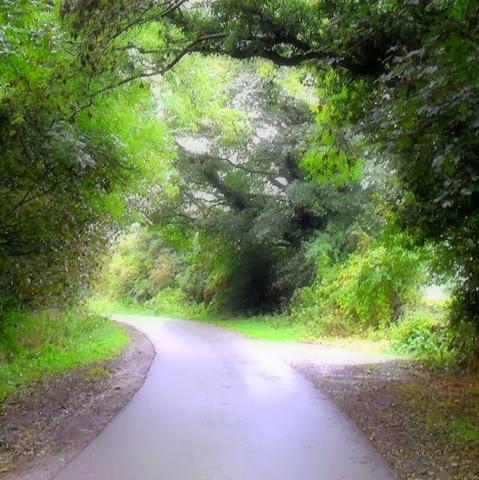sycamore - laughton lane - october 2013 - follow a tree