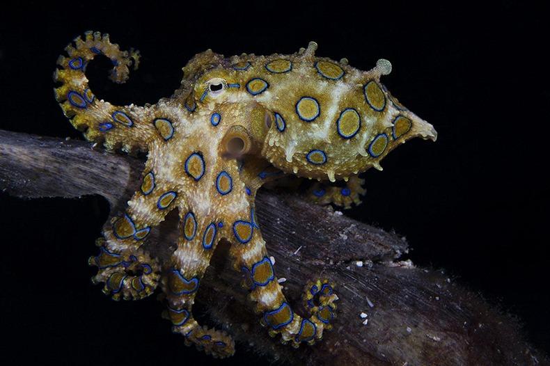 miami-underwater-photo-contest-8