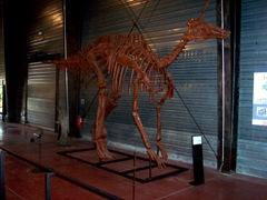 2008.09.05-005 Tsintaosaurus