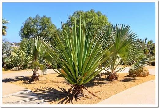 150324_SanDiego_BalboaPark_DesertGarden_048