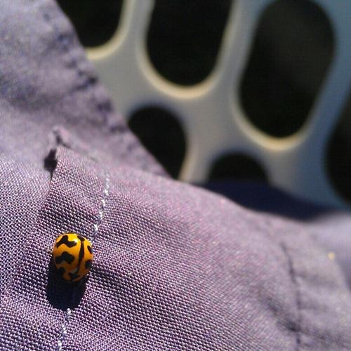 a yellow ladybug