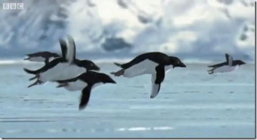 2008penguins