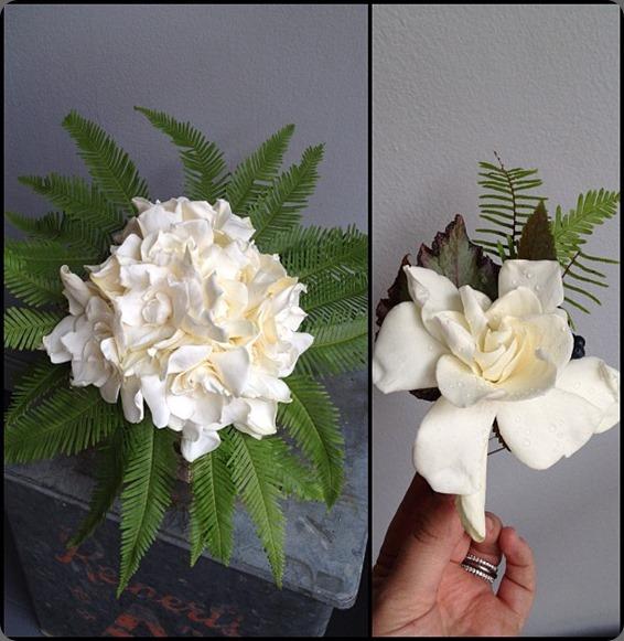gardenia 227865_497185606960602_499566487_n sullivan owen