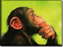 monos piensan blogdeimagenes (13)