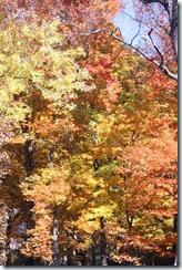 2014-10-26 Oct 26 041