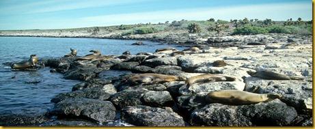 Foto Galapagos Leoni Marini 1