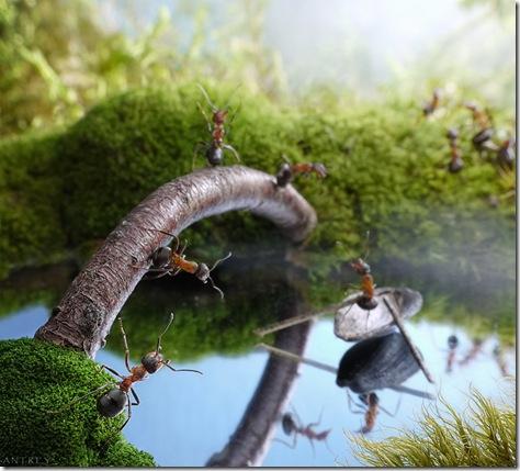 poze frumoase cu furnici