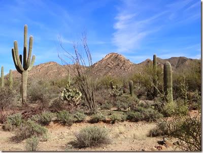 Saguaro West Nat Pk 011