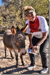 Diane Donkey