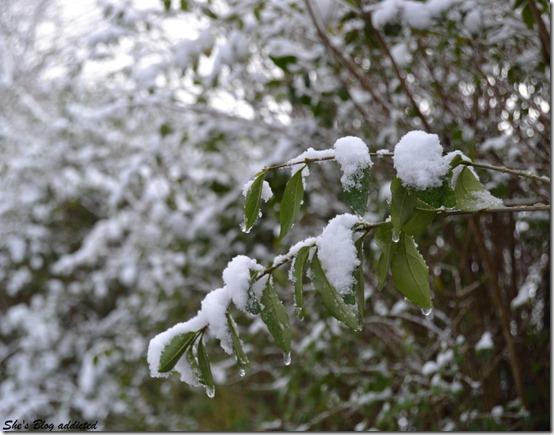 Winter2015 (87)