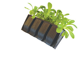Compact Rapid Rootrainers - With seedlings